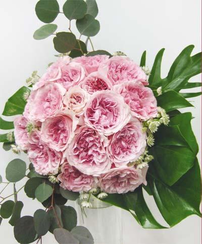 Miranda roses